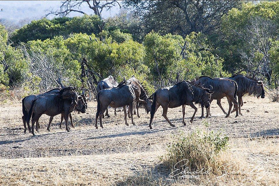 suedafrika-33-950.jpg