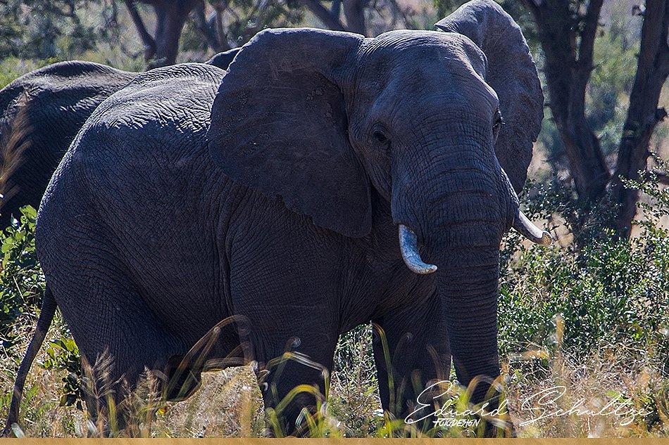 suedafrika-46-950.jpg