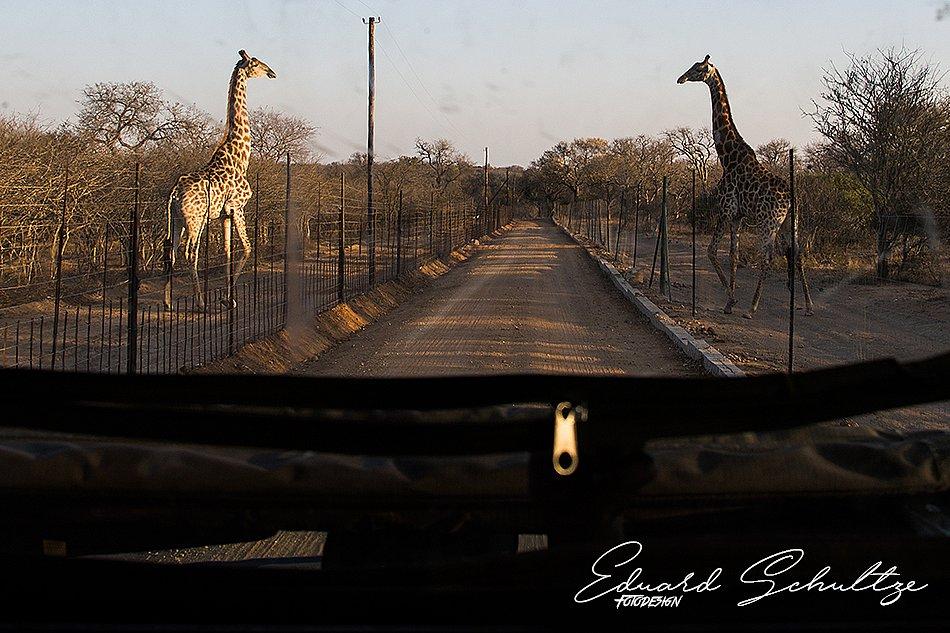 suedafrika-55-950.jpg