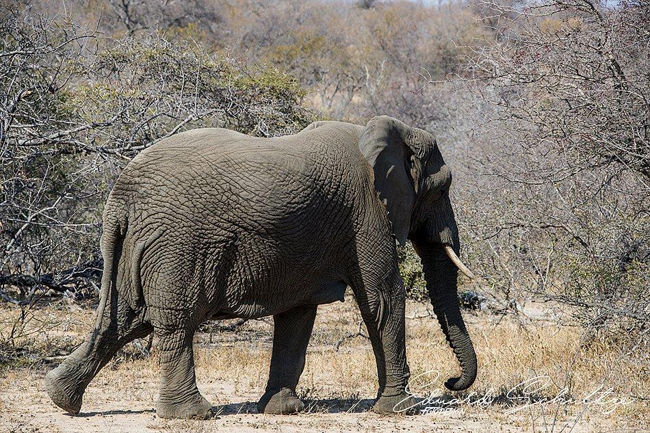 suedafrika-68-950.jpg