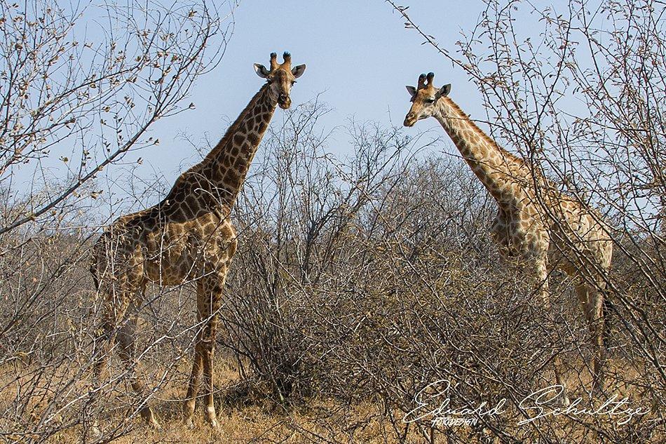suedafrika-70-950.jpg