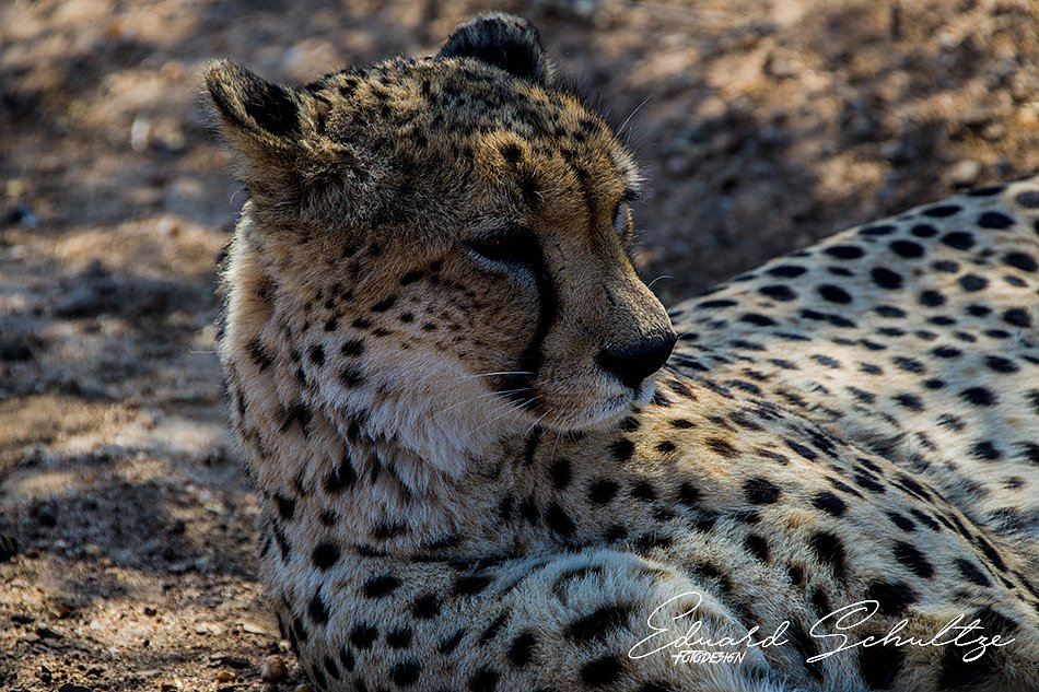 suedafrika-72-950.jpg
