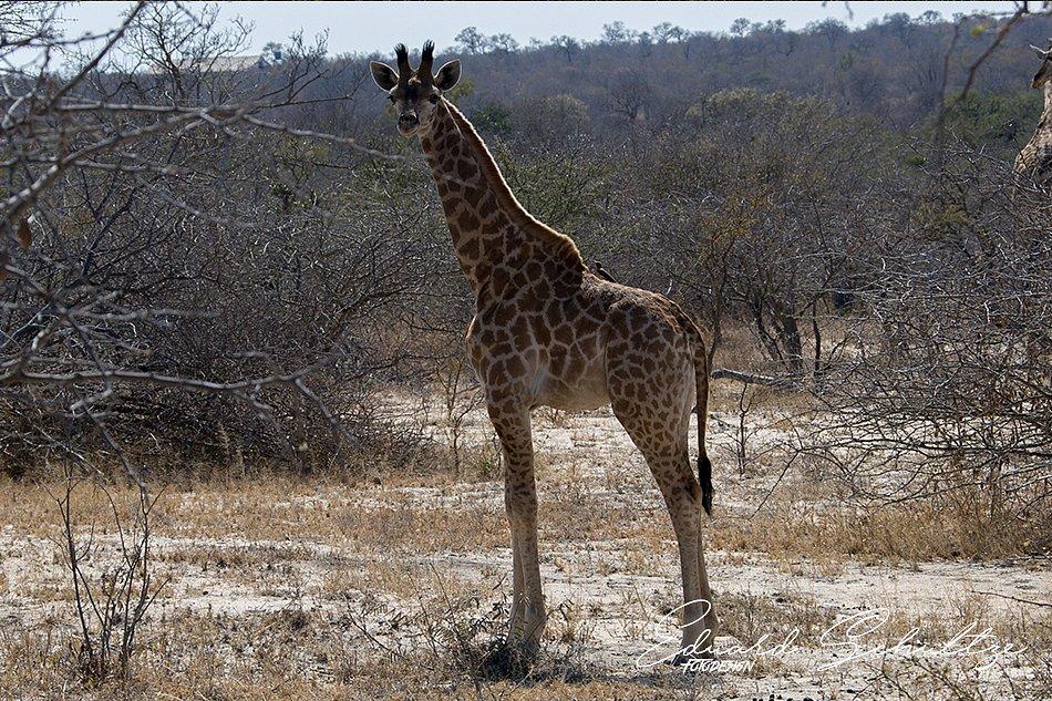 suedafrika-79-950.jpg