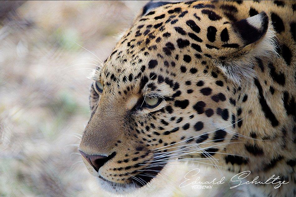 suedafrika-93-950.jpg