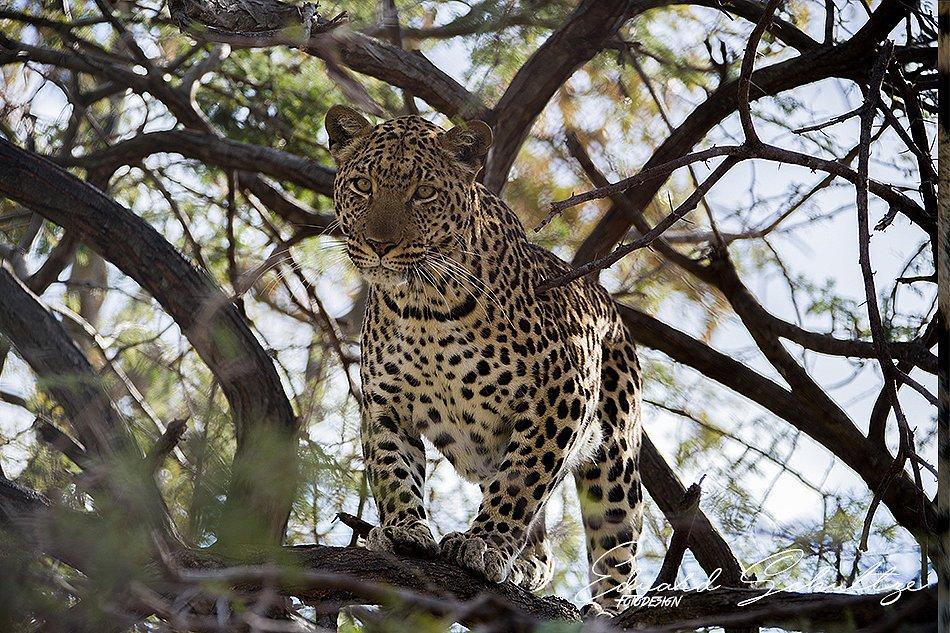 suedafrika-94-950.jpg