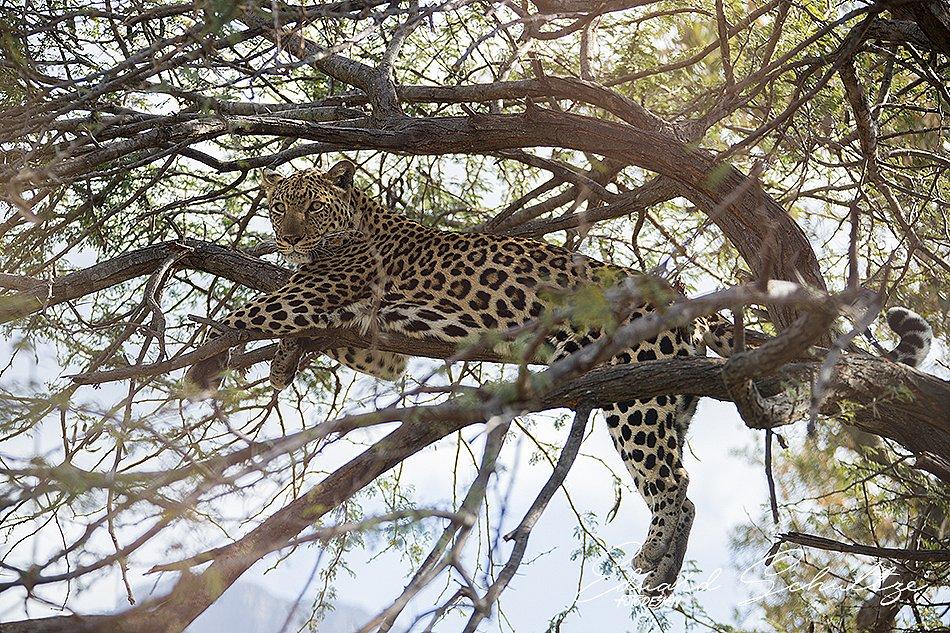 suedafrika-96-950.jpg